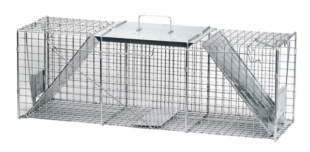 Where to find TRAP CAGE, HAVAHART, SM in Plattsburgh